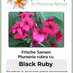 "Plumeria rubra ""Black Ruby"""