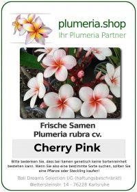 "Plumeria rubra ""Cherry Pink"""