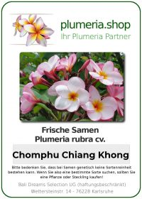 "Plumeria rubra ""Chomphu Chiang Khong"""