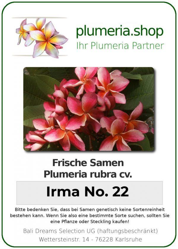 "Plumeria rubra ""Irma No. 22"""