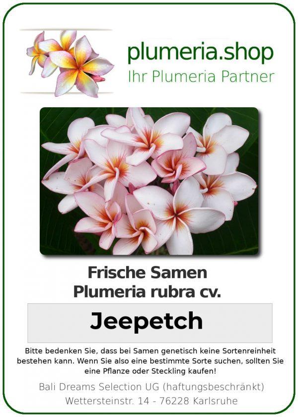 "Plumeria rubra ""Jeepetch"""