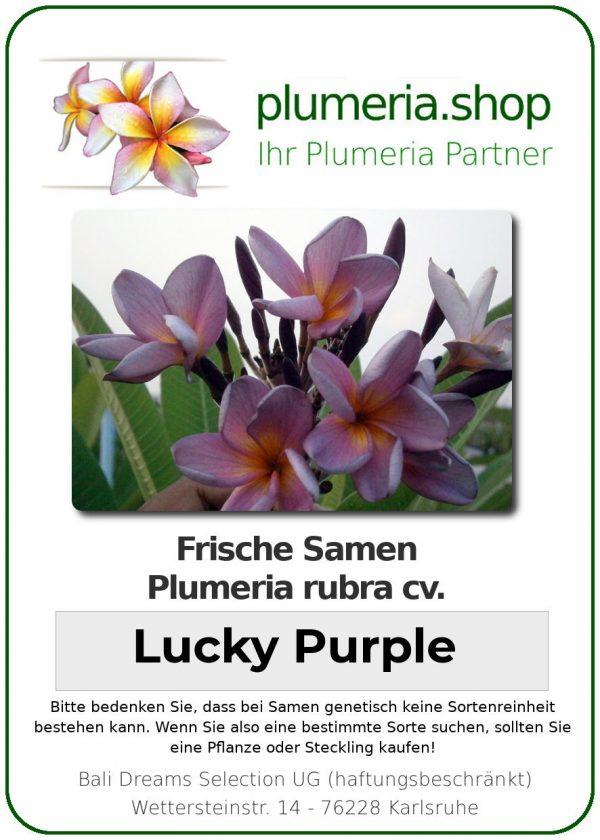 "Plumeria rubra ""Lucky Purple"""