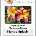 "Plumeria rubra ""Mango Splash"""