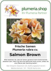 "Plumeria rubra ""Salmon Brown"""