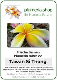 "Plumeria rubra ""Tawan Si Thong"""