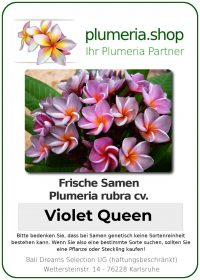 "Plumeria rubra ""Violet Queen"""