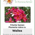 """Plumeria rubra """"Wailea"""""""