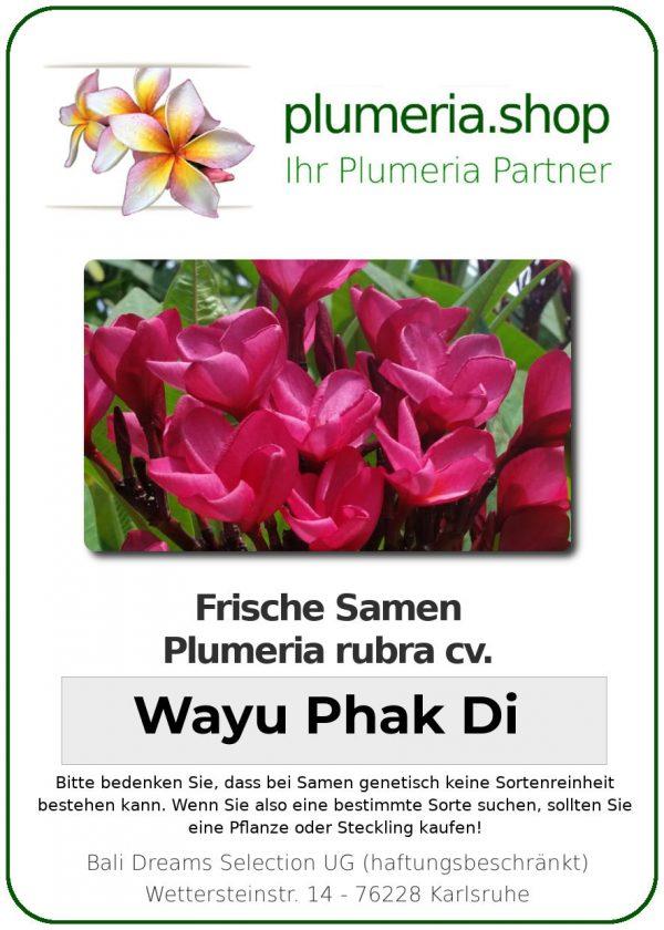 """Plumeria rubra """"Wayu Phak Di"""""""