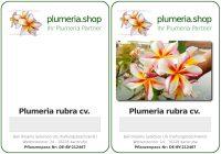 Pflanzenanhänger Plumeria