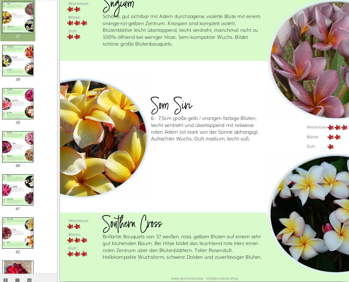 Plumeria Sorten Katalog