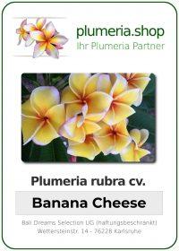 "Plumeria rubra ""Banana Cheese"""