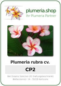 """Plumeria rubra """"CP2"""""""