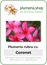 "Plumeria rubra ""Coronet"""