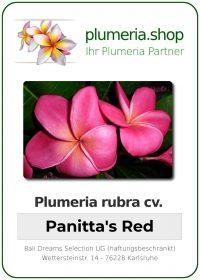 """Plumeria rubra """"Panitta's Red"""""""