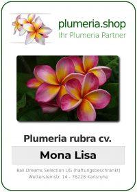 """Plumeria rubra """"Mona Lisa"""""""