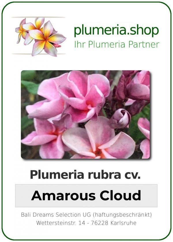 "Plumeria rubra ""Amarous Cloud"""