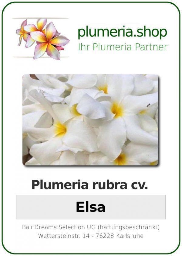 "Plumeria rubra ""Elsa"""