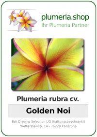 """Plumeria rubra """"Golden Noi"""""""