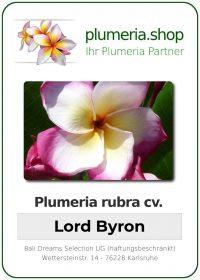 """Plumeria rubra """"Lord Byron"""""""