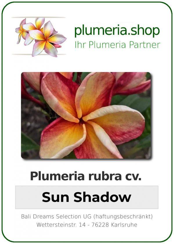 "Plumeria rubra ""Sun Shadow"""