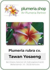 """Plumeria rubra """"Tawan Yosaeng"""""""