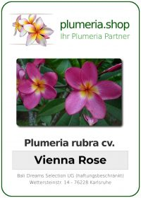 "Plumeria rubra ""Vienna Rose"""