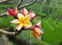 "Postkarte #34 ""Indonesian Rainbow"""