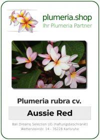"""Plumeria rubra """"Aussie Red"""""""
