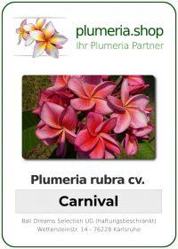 """Plumeria rubra """"Carnival"""""""