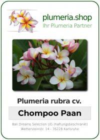"Plumeria rubra ""Chompoo Paan"""