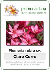 """Plumeria rubra """"Clare Corre"""""""