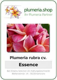 """Plumeria rubra """"Essence"""""""