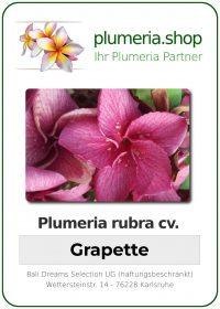 """Plumeria rubra """"Grapette"""""""
