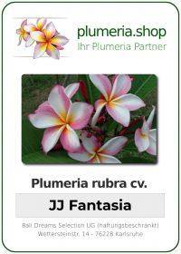 "Plumeria rubra ""JJ Fantasia"""
