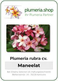"Plumeria rubra ""Maneelat"""