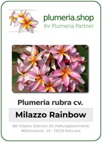 "Plumeria rubra ""Milazzo Rainbow"""
