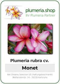 "Plumeria rubra ""Monet"""