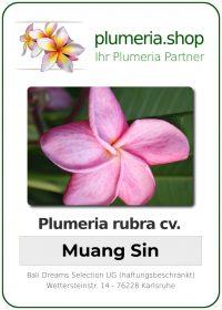 "Plumeria rubra ""Muang Sin"""