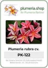 "Plumeria rubra ""PK-122"""