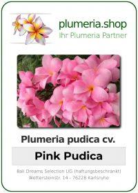 """Plumeria pudica """"Pink Pudica"""""""