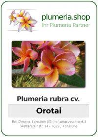 """Plumeria rubra """"Orotai"""""""