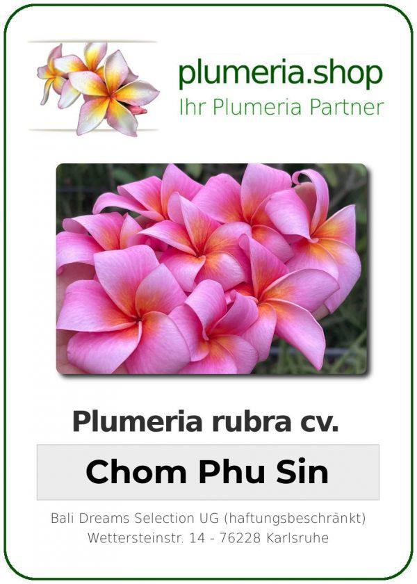 "Plumeria rubra ""Chom Phu Sin"""