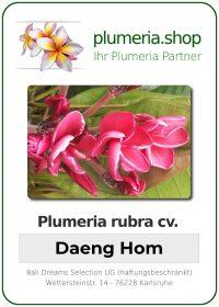 "Plumeria rubra ""Daeng Hom"""