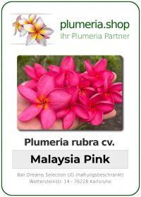 """Plumeria rubra """"Malaysia Pink"""""""