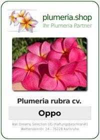 """Plumeria rubra """"Oppo"""""""