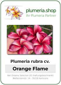 "Plumeria rubra ""Orange Flame"""