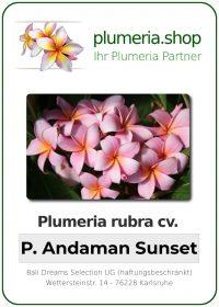 "Plumeria rubra ""Pearl Andaman Sunset"""