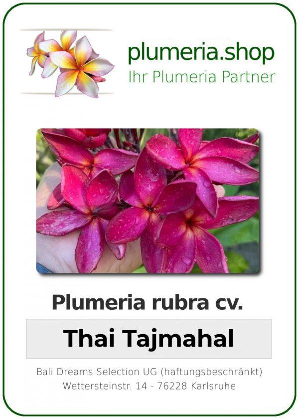 "Plumeria rubra ""Thai Tajmahal"""