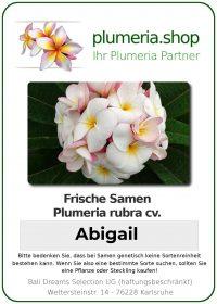 "Plumeria rubra ""Abigail"""