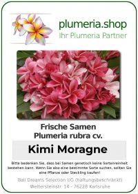 """Plumeria rubra """"Kimi Moragne"""""""